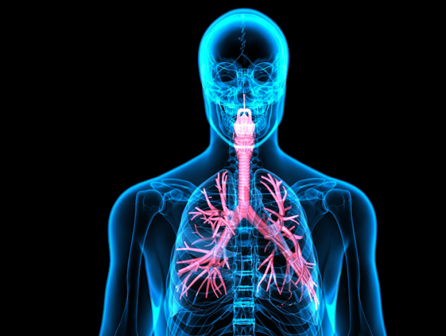 the lymph system part of the immune system